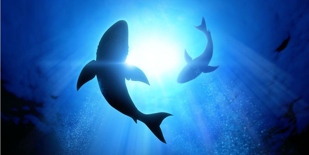 shark-tank-worth-audition